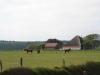 Ferienhaus_Texel_Pferde2